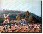 カリブ海のプランテーションで働く奴隷.jpg